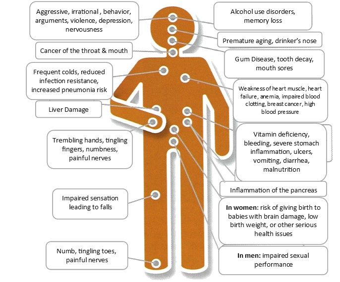 Effects of alcohol on body